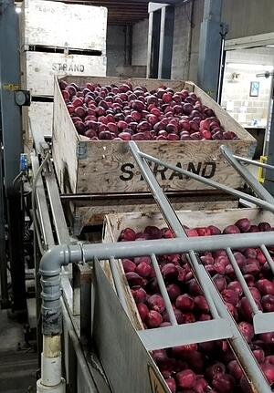 touring-strands-apples-added-value-warehouse-to-process-the-harvest-2a
