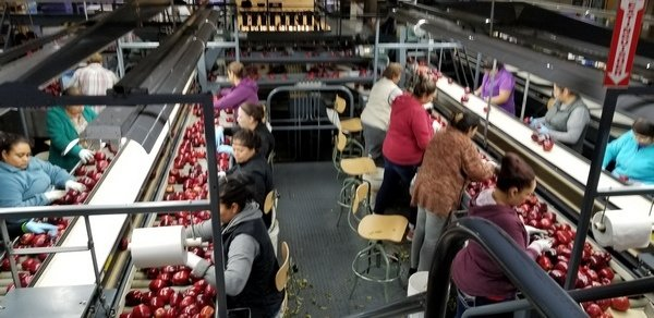 touring-strands-apples-added-value-warehouse-to-process-the-harvest-4a