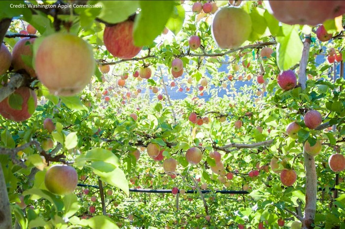touring-strands-apples-added-value-warehouse-to-process-the-harvest-8a